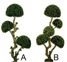 Outdoor Topiary Outside Trees Balls Live Serendipitaliainfo