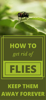 25+ Unique Get Rid Of Flies Ideas On Pinterest | Flies Repellent ... How To Get Rid Of Flies In Backyard Outdoor Goods Diy Using Pine Sol To Of House Youtube 25 Unique What Kills Fruit Flies Ideas On Pinterest Pest Keep Away Repellent Rid Rotline Do I Get Solana Center For 3 Ways Around Your Dogs Water And Food Bowls Fruit Kill Do You Chicken Coop For Happier Hens Coops Those Pesky Flies From Pnic Areas Easy Home Remedy Coping With The Fall The New York Times Outdoors Step By