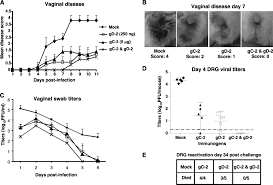 Viral Shedding Herpes 2 by Immunization With A Vaccine Combining Herpes Simplex Virus 2 Hsv