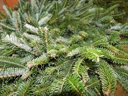 Christmas Tree Farm For Sale Boone Nc by Put A Wreath Upon Your Door News Wataugademocrat Com