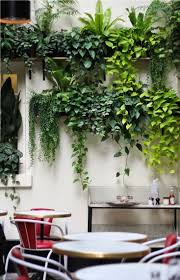 Best Plant For Bathroom by Best 25 Plant Wall Ideas On Pinterest Healthy Restaurant Design
