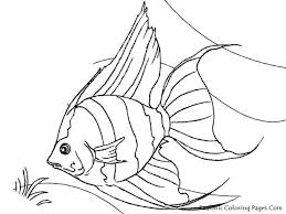 Fish Pictures Coloring Pages Rainbow Printable For Adults In Print Free Clown