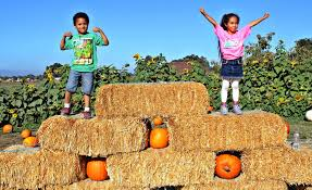 Pumpkin Patch Rides by Best Pumpkin Patches Across The Bay Area