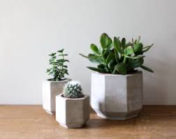 Set Of Three Geometric Concrete Planters Perfect For Cacti And Succulent Plants Plant
