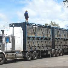 100 Livestock Trucking Companies New Owners For Qld Livestock Haulage Firm Beef Central