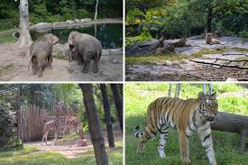 Bronx Zoo Halloween 2014 by The Adventure Starts Here September 2014