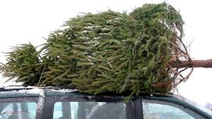 Kinds Of Christmas Trees by Does Your Christmas Tree Have Bugs Today Com