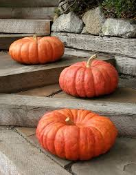 Cinderella Pumpkin Seeds Australia by Heirloom Orange Is Beautiful Now Beautifulnow