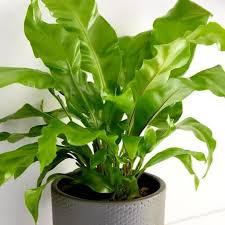grüne wohlfühloase pflanzen im schlafzimmer bloom