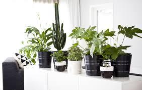 pflanzengestaltung deine wohnung in grün ikea deutschland