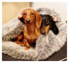 Burrowing Dog Bed by Dog Beds Rufusontheweb