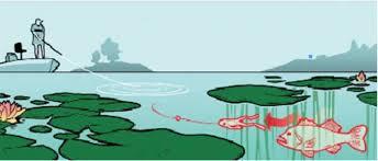 3 killer frog rigs for big bass field stream