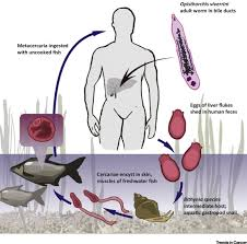 Why Does Infection With Some Helminths Cause Cancer Trends In