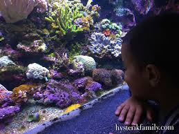 l aquarium tropical de porte dorée sortie en famille à