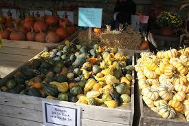 Apple Pumpkin Picking Syracuse Ny by Farm Stands Cnyfresh