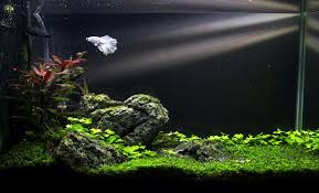 Fluval Spec Aquascape] - 28 Images - Fluval Spec V Aquascape ... 66 Gallon Bookshelf Aquarium The Planted Tank Forum Shop Pond Pumps At Lowescom Kate Will Polywood Fniture 28 Images 174 Shd19 Seashell Grillo Rugs Soumac 8019 Rug Outlet And Care Home Theater Decorations D 233 Cor Garden Shed 6 X 3 Keter Plastic Wooden Aquascape World Standard Rating In The Repair Renovation Service Contractors Contractor Aquascapes Owensboro Ky Homedesignpicturewin