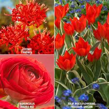 zyverden color your garden bulbs collection set of 43