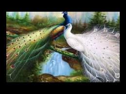 Best Beautiful Peacock HD Images Photos And Wallpaper Download