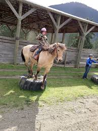 Horse Hair Shedding Blade by Horseplay Shedding Season Has Arrived Peninsula Daily News
