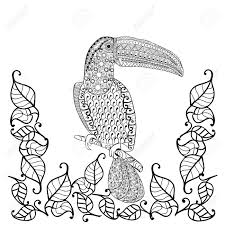 52817928 Toucan Adult Antistress Coloring Page Black And White Hand