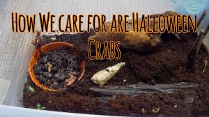Halloween Hermit Crab Care by How We Care For Our Halloween Crabs Care Sheet Youtube