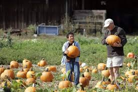 Peter Pumpkin Patch Petaluma by It U0027s Pumpkin Hunt Time