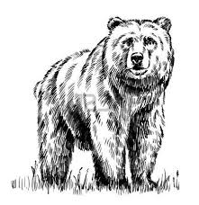 Drawn Grizzly Bear California Flag 133487