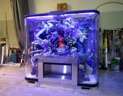 Aquarium Design Group - The Amazing Aquarium Design – Indoor And ... Amazing Aquarium Designs For Your Comfortable Home Interior Plan 20 Design Ideas For House Goadesigncom Beautiful And Awesome Aquariums Cuisine Small See Here Styfisher Best Stands Something Other Than Wood Archive How To In Photo Good Depot Kitchen Cabinet Sale 12 To Home Aquarium Custom Bespoke Designer Fish Tanks Perfect Modern Living Room Lighting 69 On Great Remodeling Office 83 Design Simple Trending Colors X12 Tiles Bathroom 90
