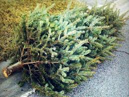 City Of Chicago Christmas Tree Recycling 2017