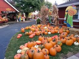 Goebbert Pumpkin Patch In Barrington Il by Pumpkin Patches U0026 Farms Near Nw Suburbs Of Chicago Fun Day For