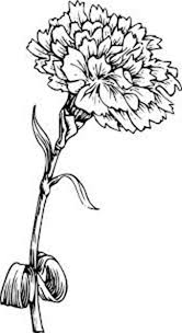 Picture Of Carnation Flower Colouring Page
