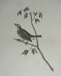 Audubon And His Journals Vol 2