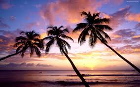Beach Palm Tree Sunset 13482 Hd Wallpapers In N Tropical