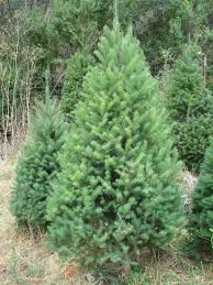 Best Type Of Christmas Tree by Christmas Christmas Tree Types Best Living Hgtv Live