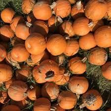 Pumpkin Patches Cincinnati Ohio Area by Burger Farm U0026 Garden Center 106 Photos U0026 12 Reviews Nurseries