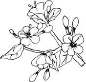 Flowers In Cross Coloring Page