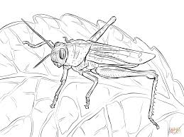 Click The Egyptian Grasshopper Coloring Pages