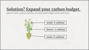 Define The Word Carbon Sink by Dirt As A Carbon Sink Capitalism