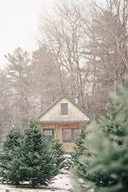 Ceramic Christmas Tree Bulbs At Michaels by Shopper U0027s Diary A Christmas Tree Farm In Maine Gardenista
