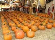Seymour Pumpkin Festival 2017 by Displaying Items By Tag Toluca Lake Pumpkin Festival