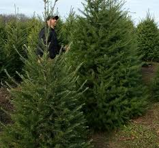 Michigan Farms Could Get In On Amazons Sale Of Real Christmas Trees