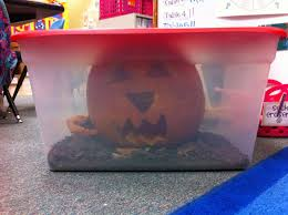 Pumpkin Stages Of Growth Worksheet by Welcome To Room 36 Pumpkins And The 50th Day Of