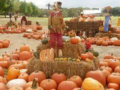 Pumpkin Patches Maryland Heights Mo by Bi Zi Farm Corn Maze And Pumpkin Patch Ideas For Pumpkin Patch