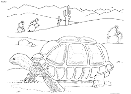 Elegant Desert Animal Coloring Pages 54 In Download With