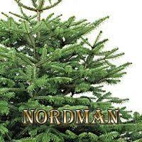 Nordmann Fir Christmas Trees Wholesale by Deerbrooke Farm Photo Gallery Premium Christmas Tree Lot In Las