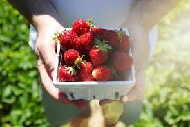 Christmas Farm Inn Jackson Nh Menu by Strawberry Fields Forever Summer Berry Picking Jackson House
