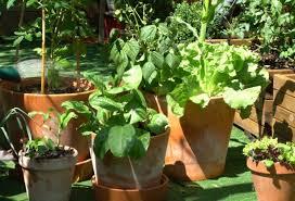 comment installer un potager en pot sur une terrasse ou un balcon