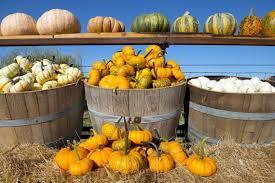 Nearby Pumpkin Patches by The Jennifer Steele Show 10 9 17 101 5 K Hits Sacramento