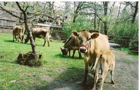 Milk Farm Dixon Pumpkin Patch by Agritourism Connections Agriculture And Natural Resources Blogs