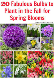 20 fabulous bulbs to plant in the fall for blooms jpg